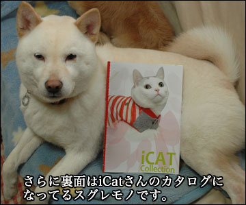iDog/iCatさんのカタログ-3コマ