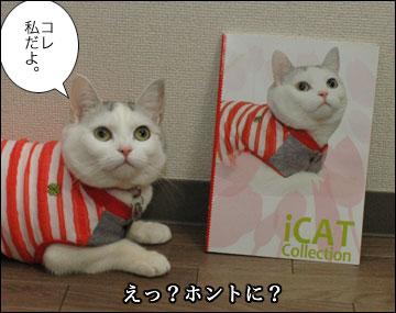 iDog/iCatさんのカタログ-5コマ