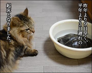 カメ姉さんの目覚め!-2コマ