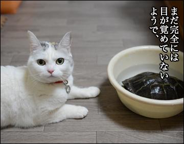 カメ姉さんの目覚め!-3コマ