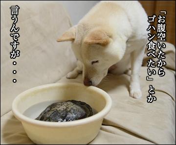 カメ姉さんの目覚め!-5コマ