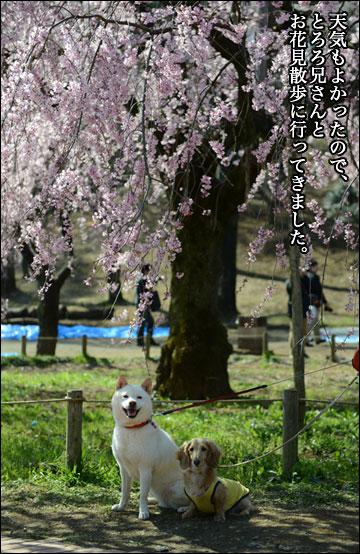 花見散歩-1コマ