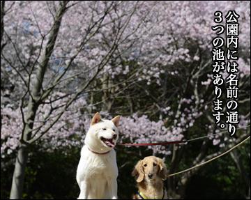 花見散歩-5コマ