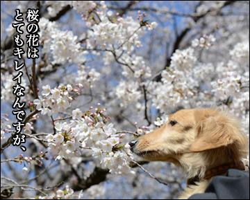 花見散歩-7コマ