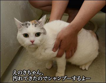 えのきちゃんのシャンプー-1コマ