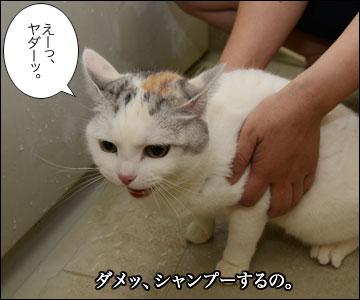 えのきちゃんのシャンプー-2コマ