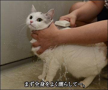 えのきちゃんのシャンプー-3コマ