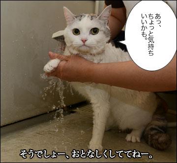 えのきちゃんのシャンプー-4コマ