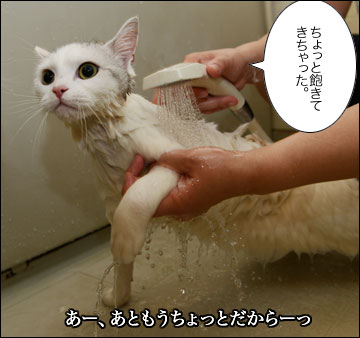 えのきちゃんのシャンプー-8コマ