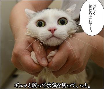 えのきちゃんのシャンプー-10コマ
