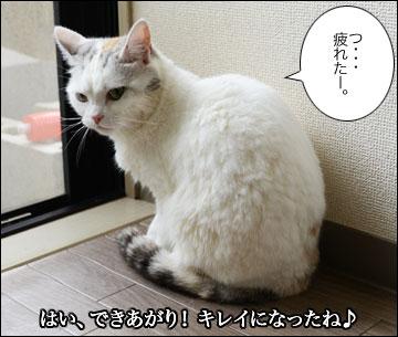 えのきちゃんのシャンプー-13コマ