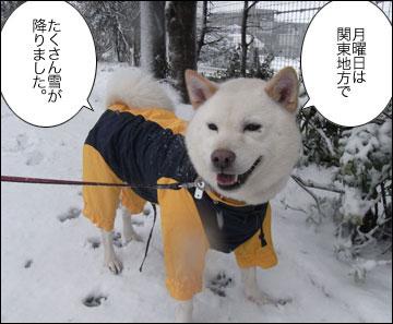 雪やこんこ-1コマ