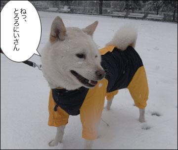 雪やこんこ-4コマ