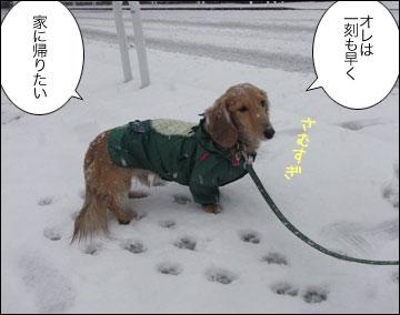 雪やこんこ-5コマ