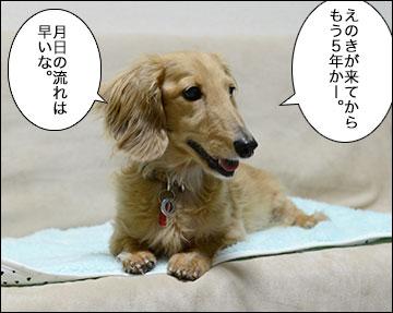 えのきちゃん5歳の誕生日-2コマ