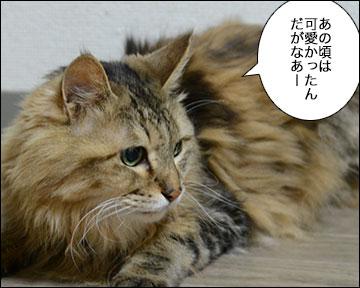 えのきちゃん5歳の誕生日-3コマ