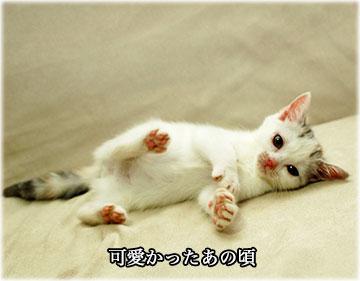 えのきちゃん5歳の誕生日-4コマ